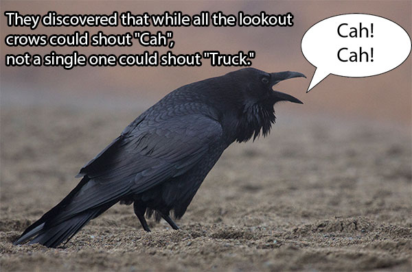 Poor Boston crows; couldn't yell truck and save their friends (You can tell I visit 9gag too much).